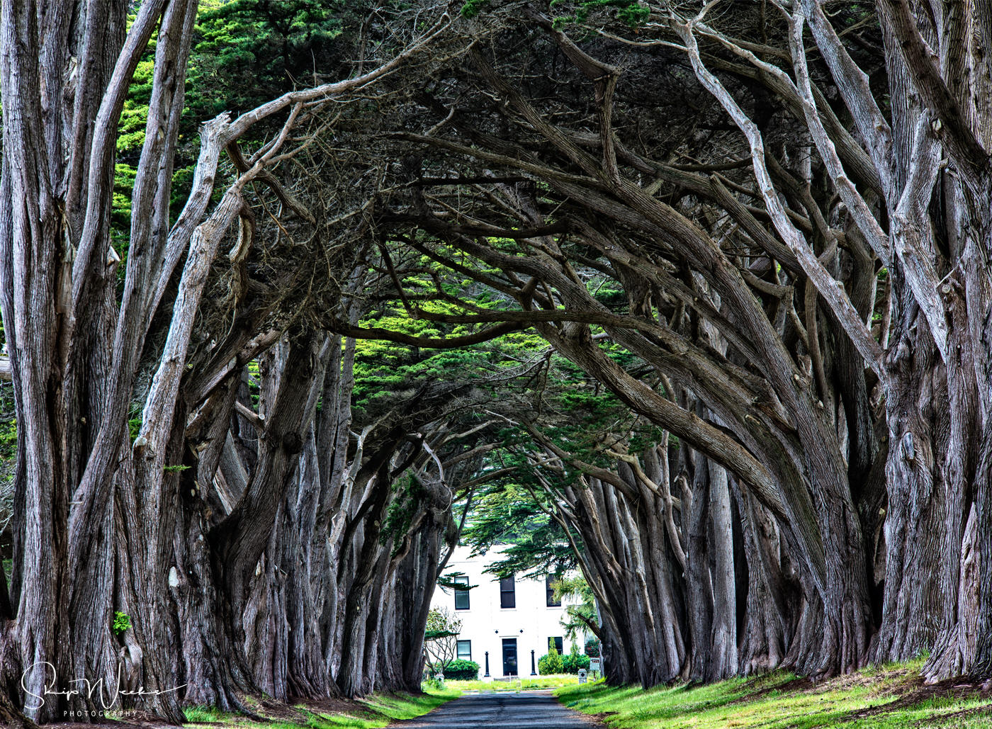 Cyprus Tree Tunnel in Marin County by Skip Weeks